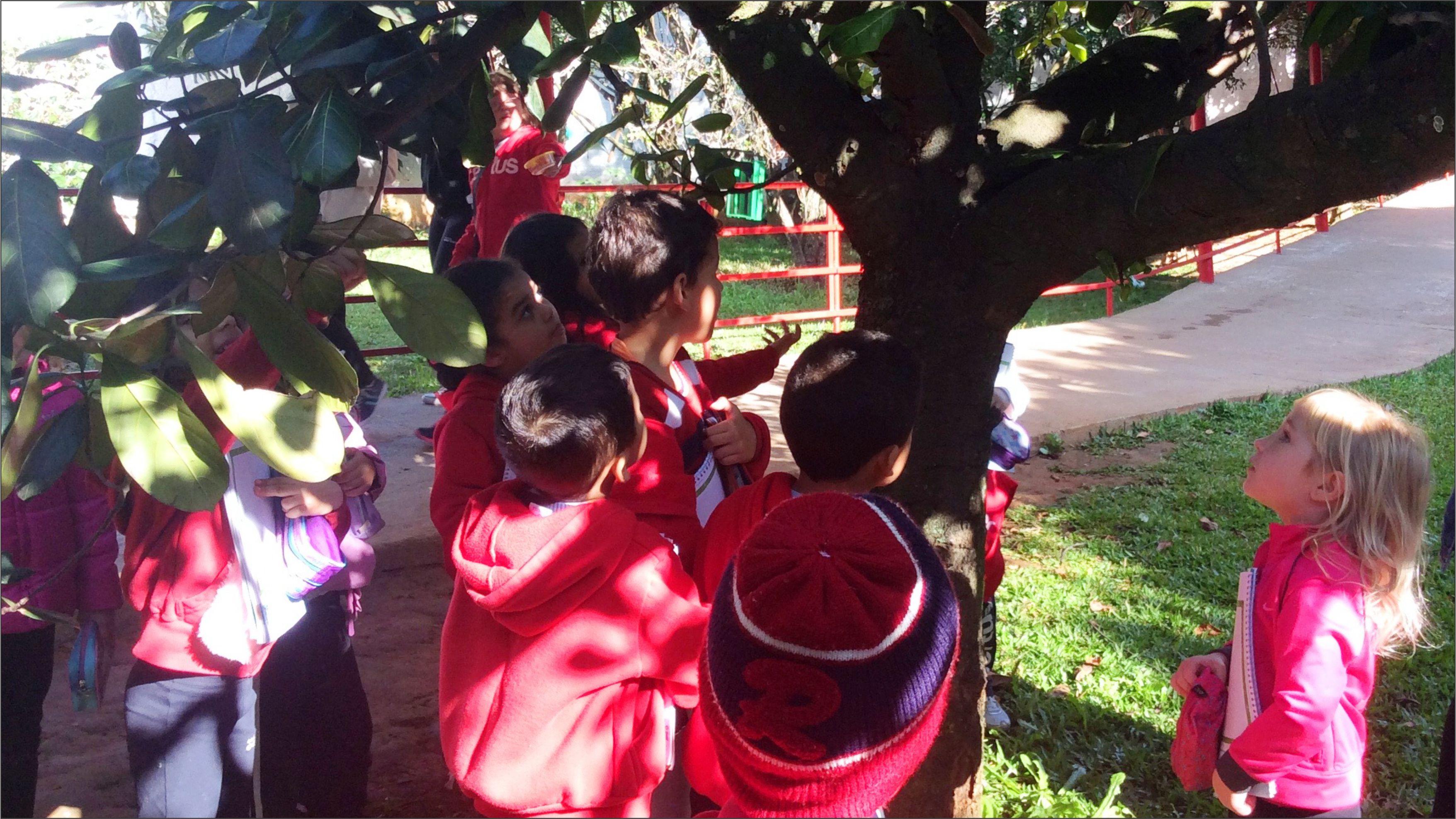 Turma do Pré A1 do Certus faz observação de árvores no pomar do colégio
